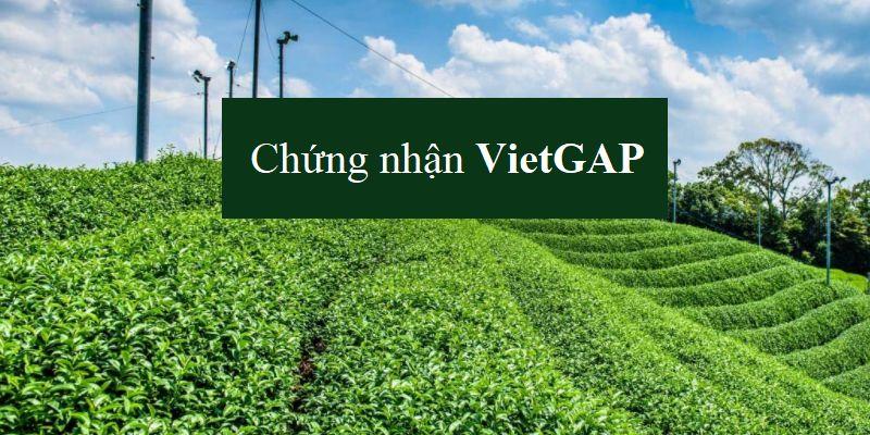Chứng nhận Việt Gap cho sản phẩm trồng trọt